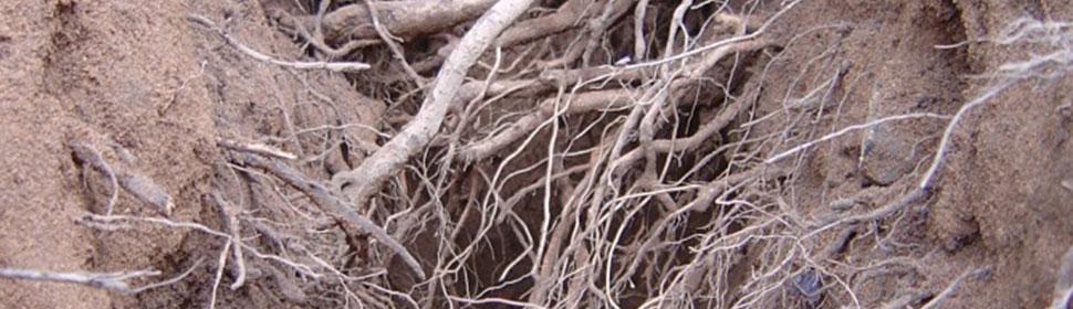 Roots & Rhizosphere