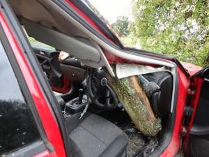 When Trees Fail