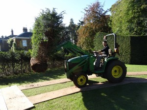 Specialist Hedge Planting